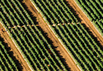 Natural & Organic Food: An Investment for the Next Economy ~ White Paper