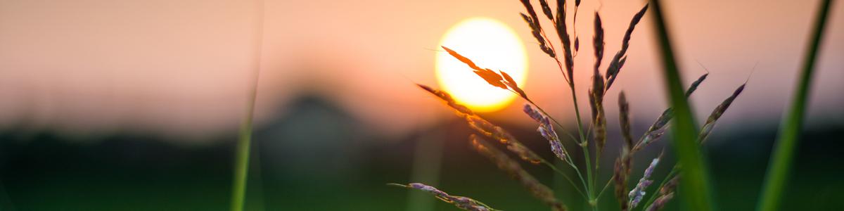Sunset Wheat Post Image