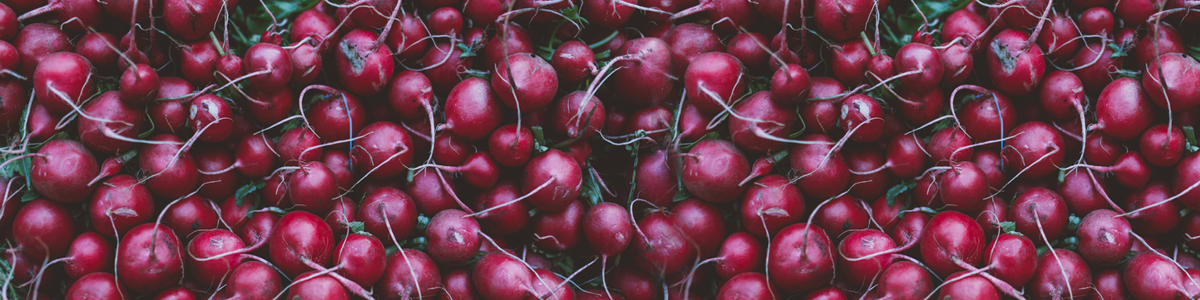 radishes-post-pic